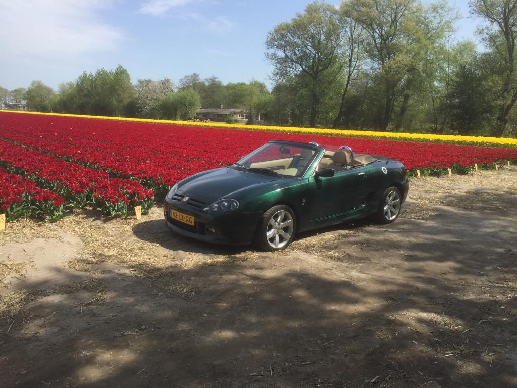 My MG TF this week in The Netherlands